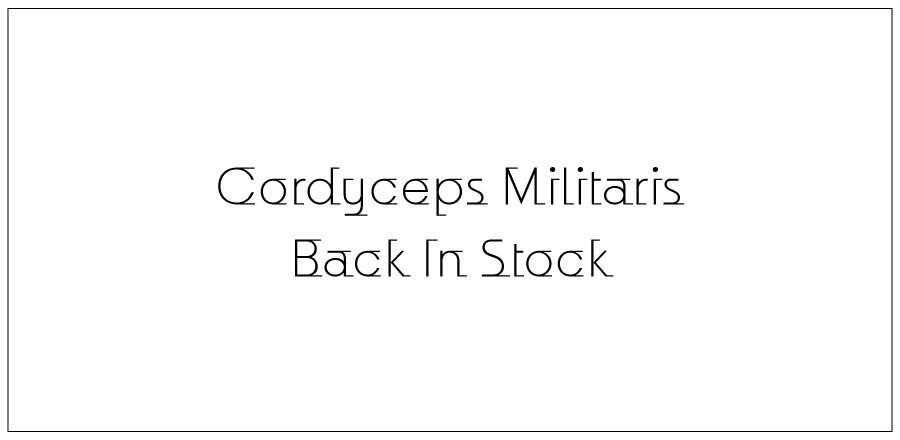 cordyceps militaris back in stock