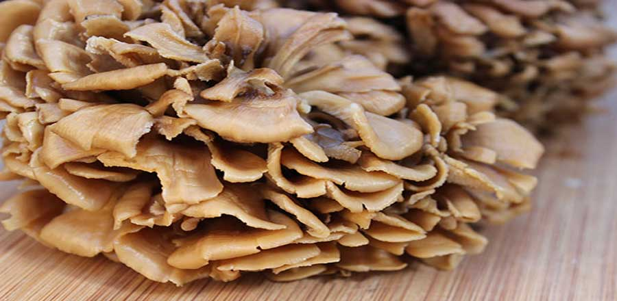 Maitake Extract benefits