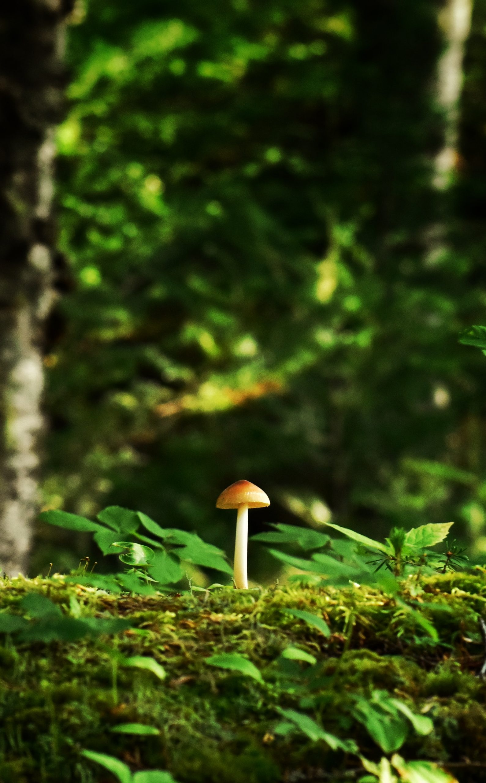 9 Different Types Of Edible Mushrooms And Their Benefits