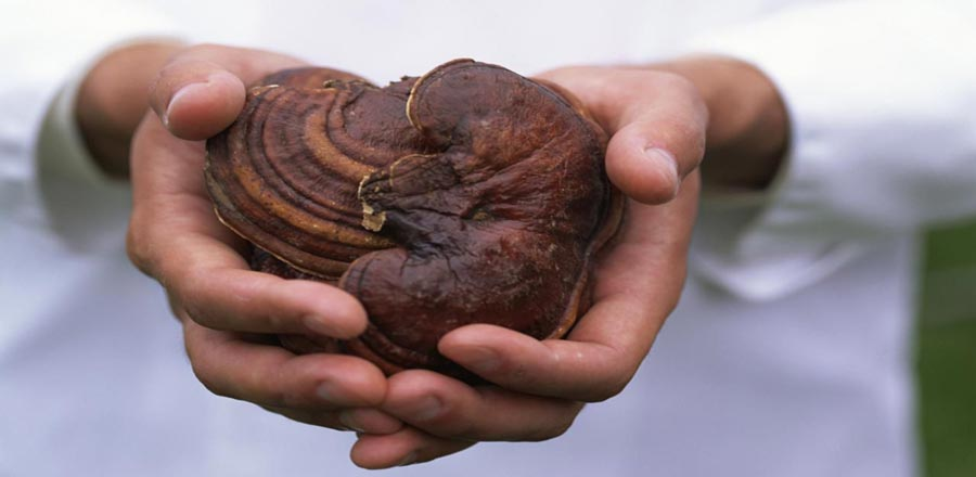 amazing health benefits of reishi