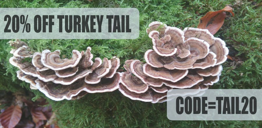 turkey tail extract discount